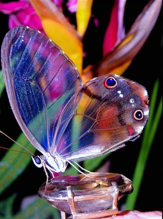 colorful-and-stunning-butterfly-photography-7