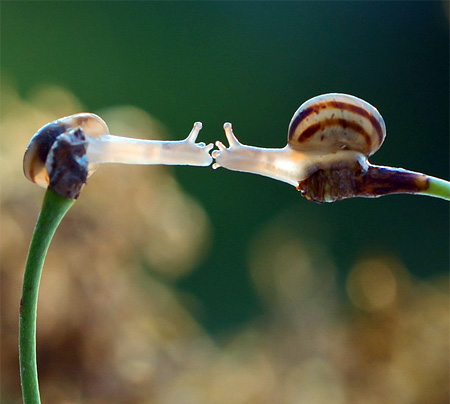 incredible-photography-of-snails-10