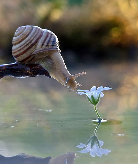 incredible-photography-of-snails-11