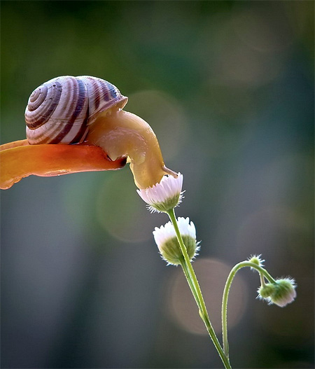 incredible-photography-of-snails-12