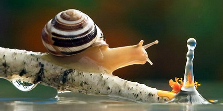 incredible-photography-of-snails-13