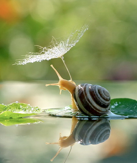 incredible-photography-of-snails-14