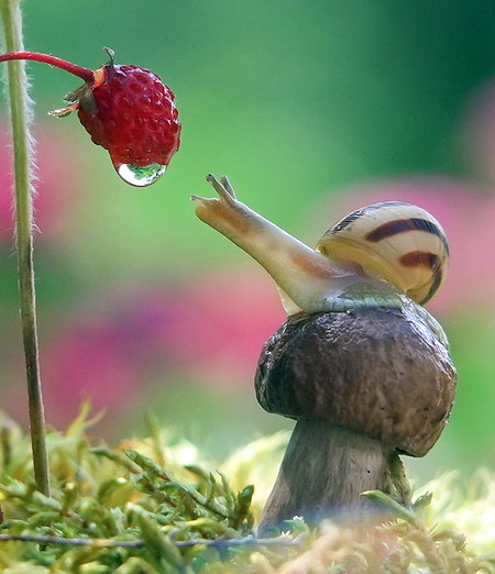 incredible-photography-of-snails-15
