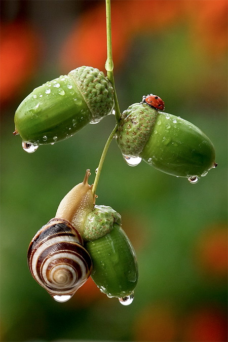 incredible-photography-of-snails-16