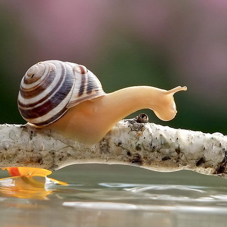 incredible-photography-of-snails-17