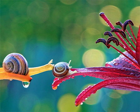 incredible-photography-of-snails-18