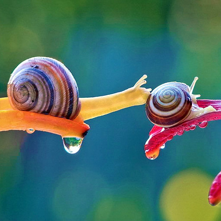 incredible-photography-of-snails-19
