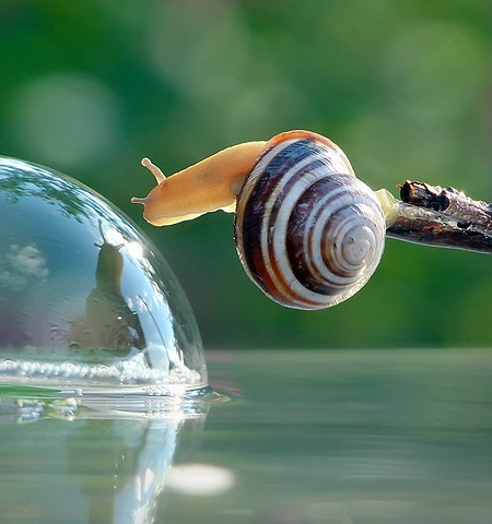 incredible-photography-of-snails-2