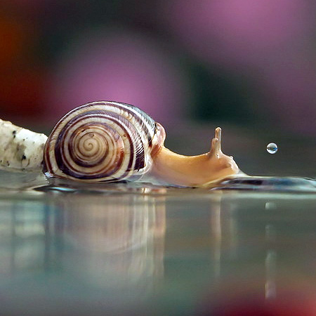 incredible-photography-of-snails-3