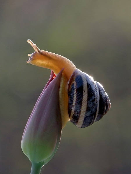 incredible-photography-of-snails-5