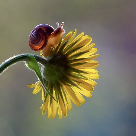 incredible-photography-of-snails-7