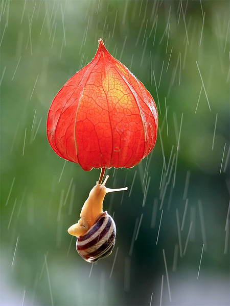 incredible-photography-of-snails-8