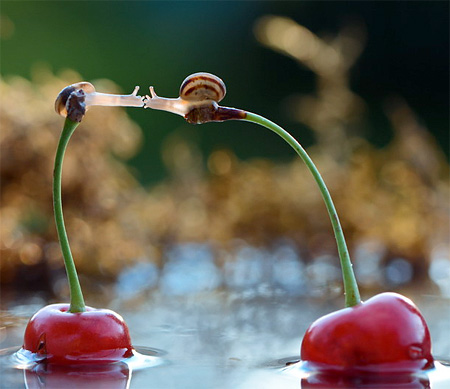 incredible-photography-of-snails-9