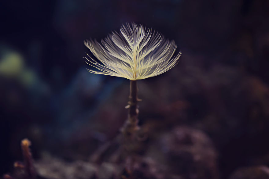 The Beauty Of Small Things Photography Great Inspire