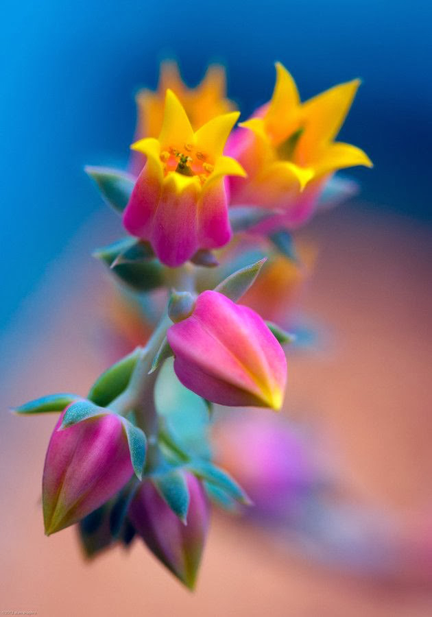 awesome-unusual-flowers-1