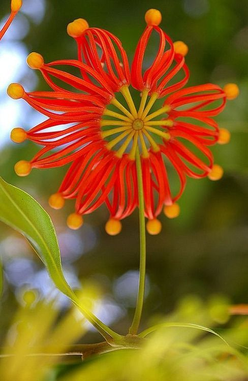 awesome-unusual-flowers-20