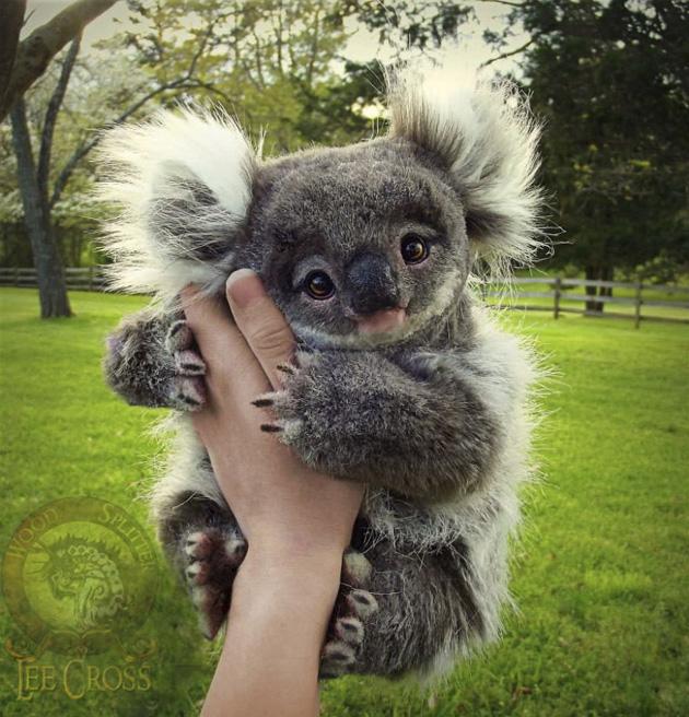 baby-koala
