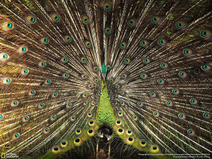 2016-national-geographic-photography-14