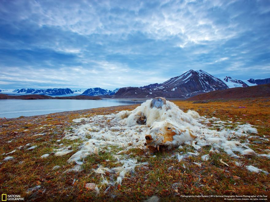2016-national-geographic-photography-3