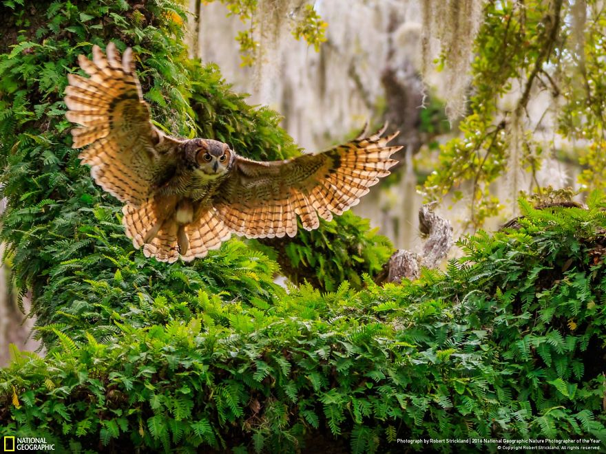 2016-national-geographic-photography-4