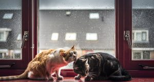 cute-cat-photos-in-front-of-the-windows-5