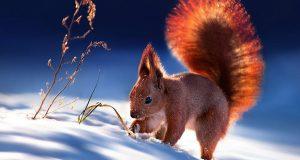 stunning-animal-portraits-8