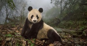 greatest-photography-of-the-year-announced-by-national-geographic-2