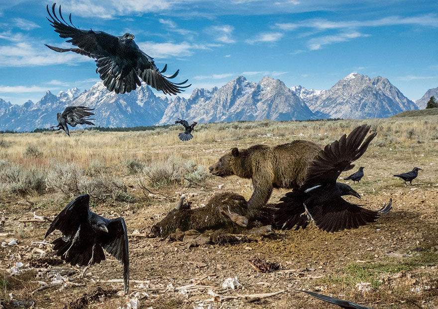greatest-photography-of-the-year-announced-by-national-geographic-5