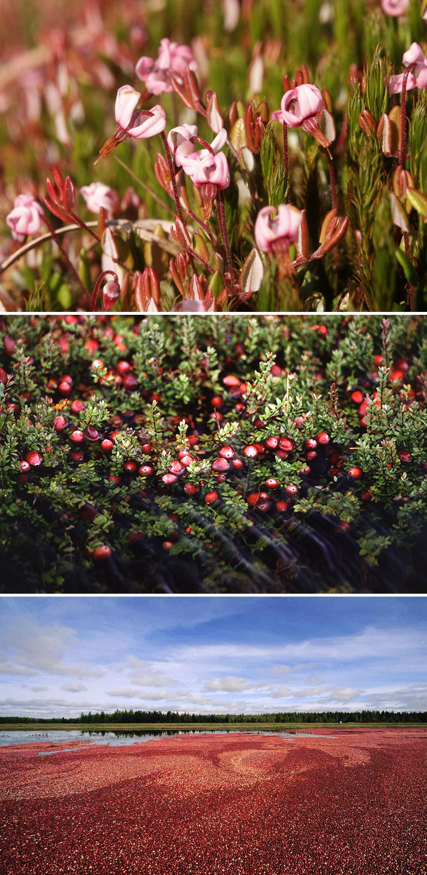 Surprising Images of How Food Looks Before It's Harvested (10)