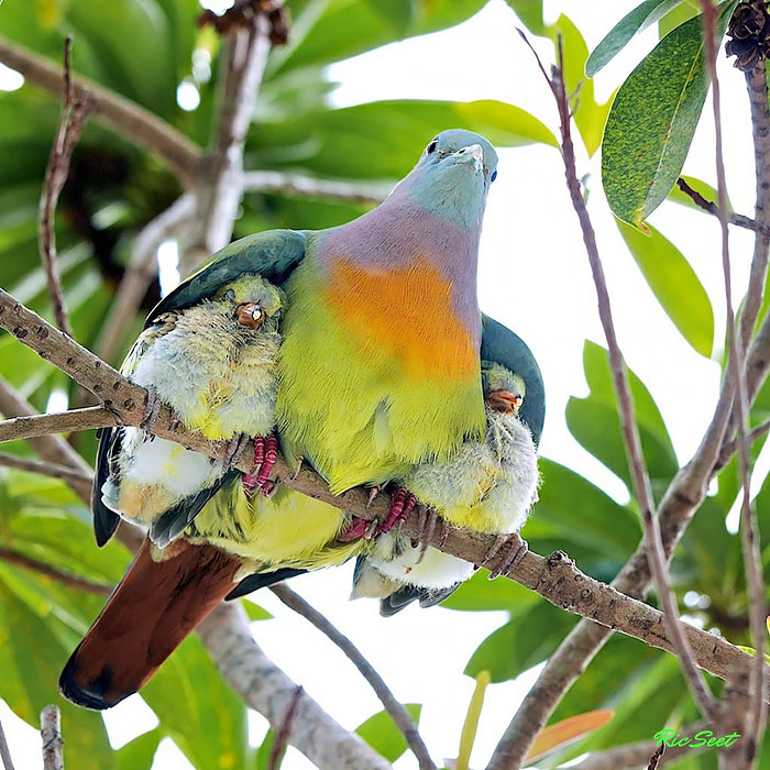 Birds Taking Care Of Their Babies (2)