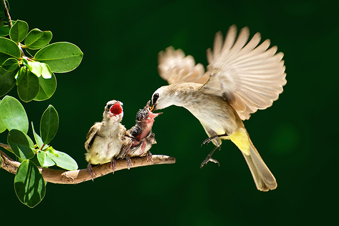 Birds Taking Care Of Their Babies (23)