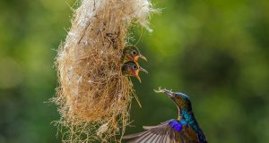 Birds Taking Care Of Their Babies (25)
