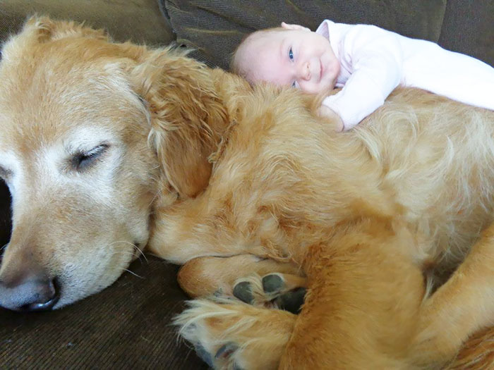 Cutest Babies Images With Puppy Dogs (11)