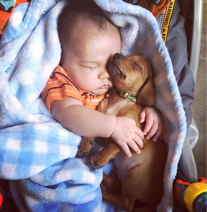 Cutest Babies Images With Puppy Dogs (5)