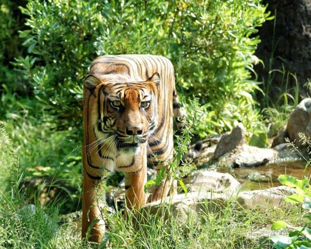 Cubism - Animals Photo Manipulation (13)