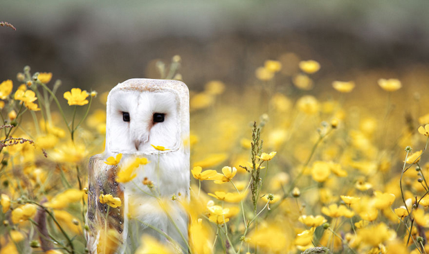 Cubism - Animals Photo Manipulation (15)