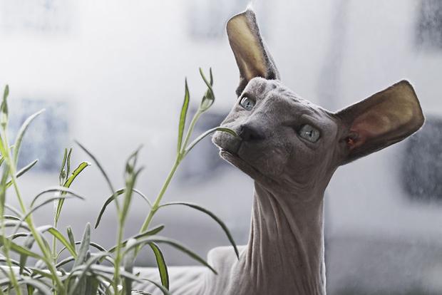 Cubism - Animals Photo Manipulation (3)