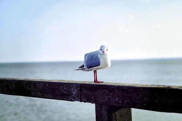 Кубизм - Животные Работы С Фотографиями (7)