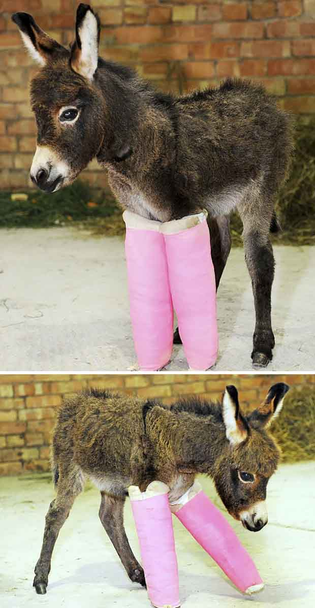 15+ Funny & Cute Baby Donkeys | Great Inspire