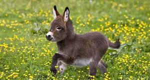 15 Funny Cute Baby Donkeys