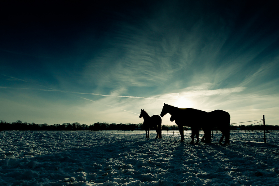 Some horses by Gruen Pix