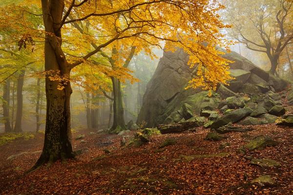 Autumn forest 4 by Daniel Řeřicha
