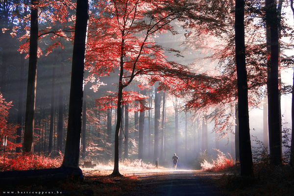 Autumn is just around the corner 6 by Bart Ceuppens