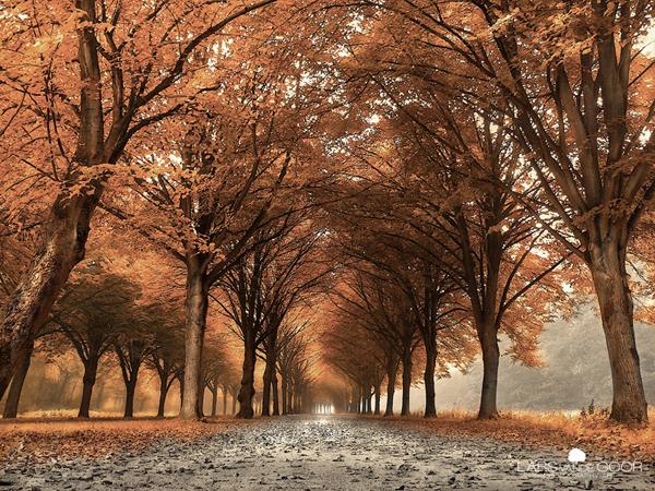 Copper Lane rld by Lars van de Goor