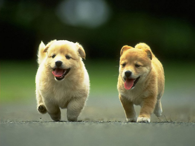 75 Cute Puppy Dog Photos Great Inspire