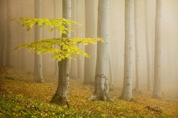 Fairytale forest by Daniel Řeřicha