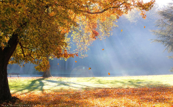 heavenly autumn by Bart Ceuppens