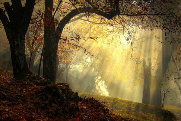 regenerating sensations autumn - Missano -  zocca modena italy