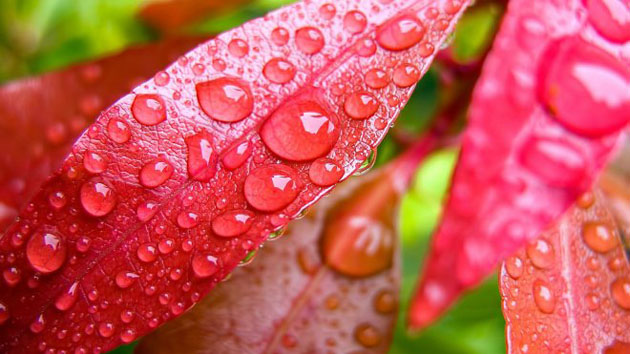 34 beautiful rain wallpaper (7)