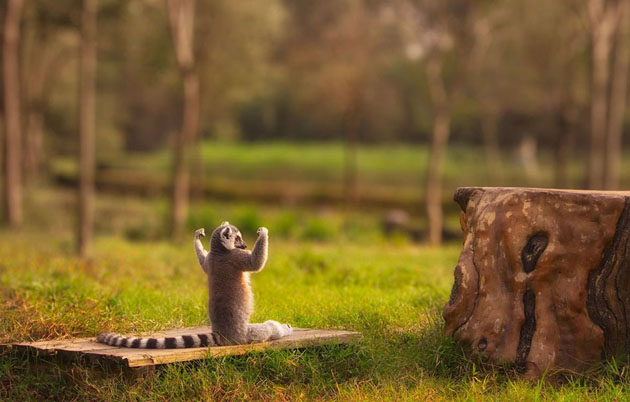 4-best-wildlife-photography-strongest-in-forest